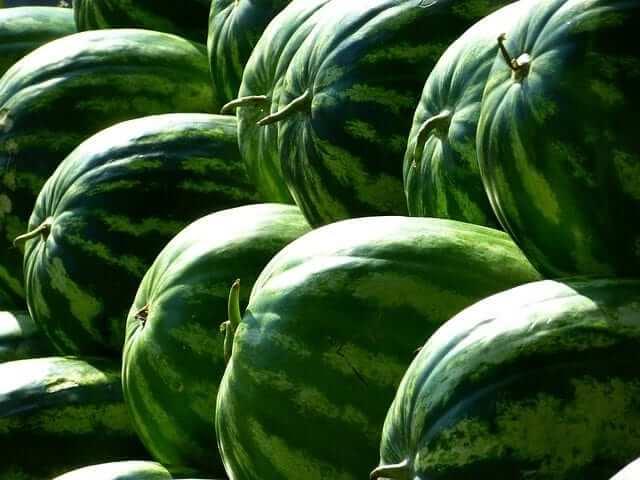 Wassermelone für das Training