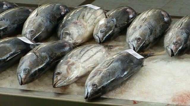 Thunfisch ist schlecht für das Gehirn