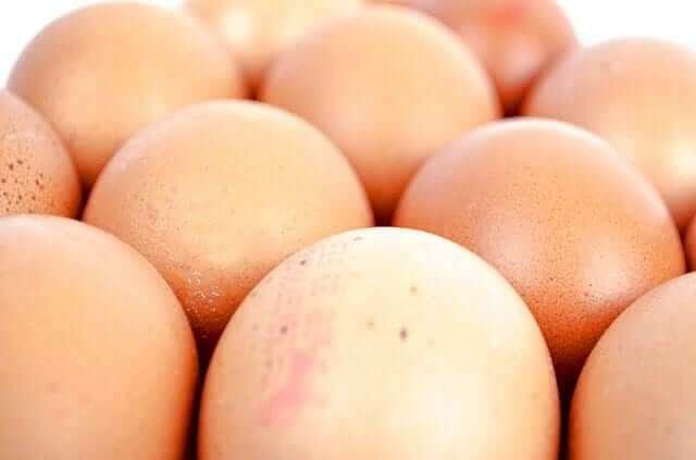 Ganze Eier für das Training